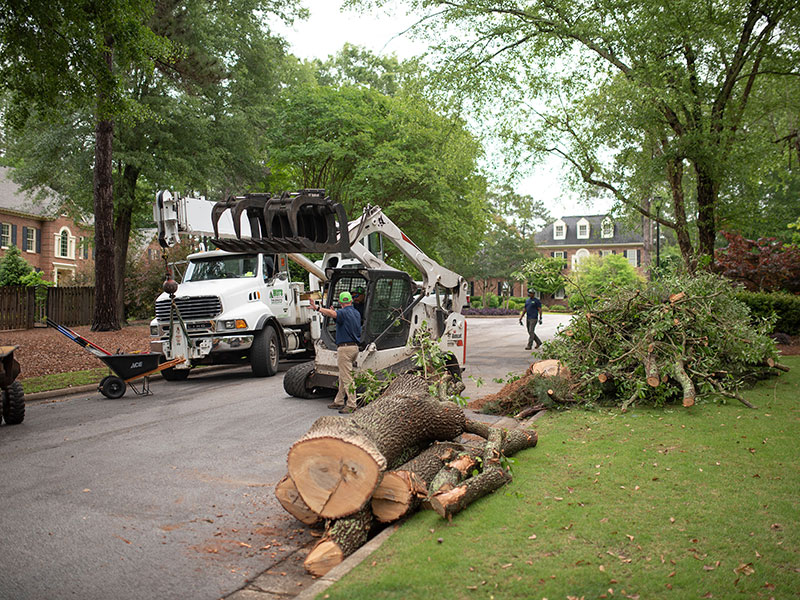 Affordable tree service augusta evans martinez georgia tree removal 1 solutioingenieria Image collections