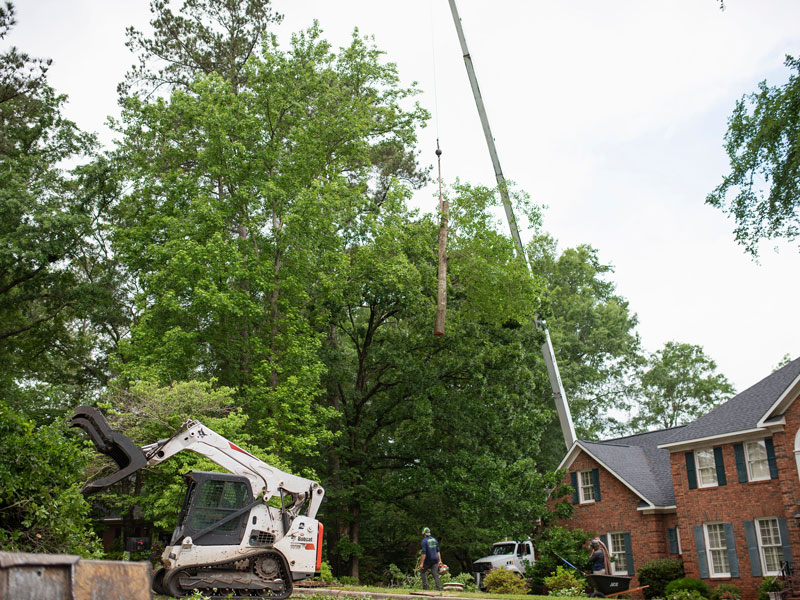 Affordable tree service augusta evans martinez georgia tree removal 2 solutioingenieria Image collections