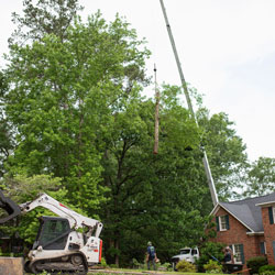 tree-removal-2
