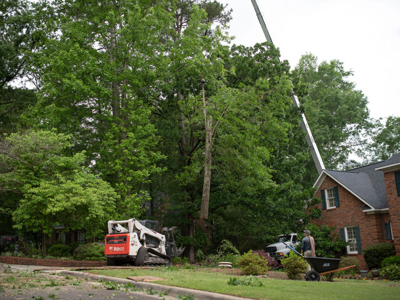 Affordable tree service augusta evans martinez georgia tree removal 3 solutioingenieria Image collections