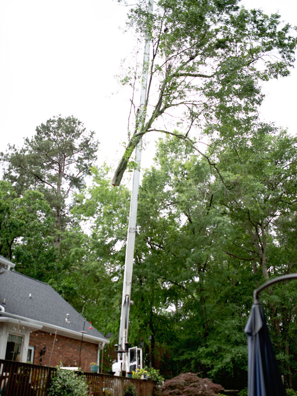 Affordable tree service augusta evans martinez georgia tree removal 6 solutioingenieria Image collections
