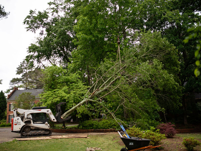 Affordable tree service augusta evans martinez georgia tree removal 7 solutioingenieria Image collections