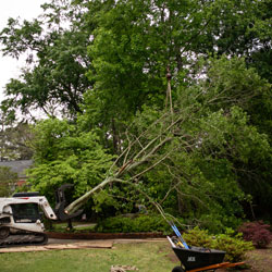 tree-removal-7